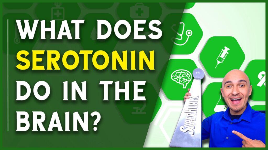 What Does Serotonin Do in the Brain Medical Terminology Neurotransmitter